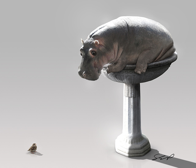 Hippo Bird Bath Manipulation